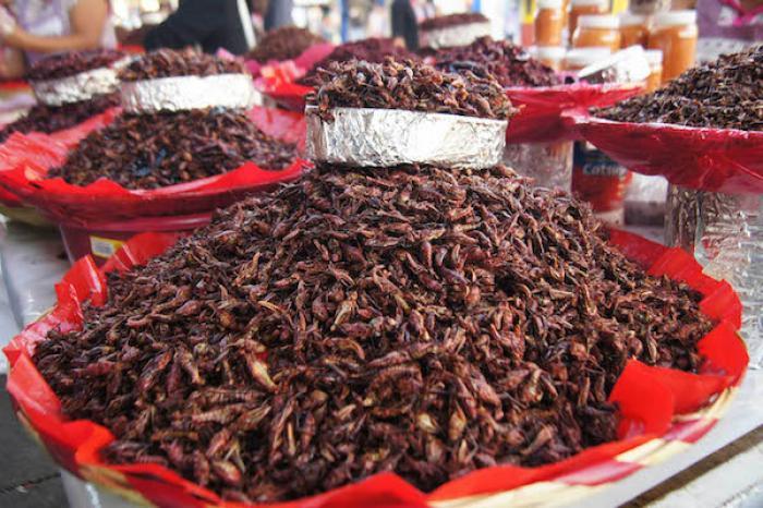 Cultivo y consumo de insectos, opción ante la creciente demanda de alimentos