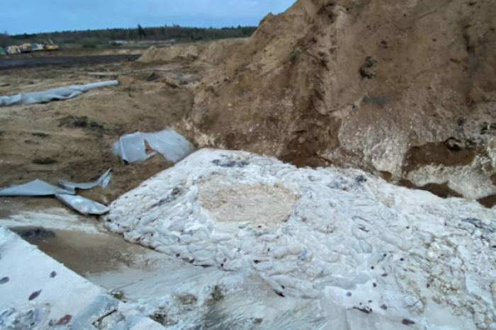 Cadáveres de visones salen de su tumba en Dinamarca